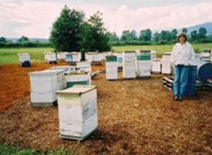 Getting to Know: Vlad's Apiary