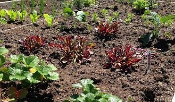 Building Your Backyard Garden