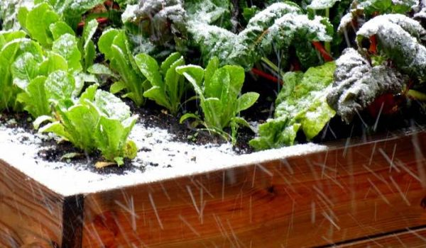 Winter Gardening Workshop