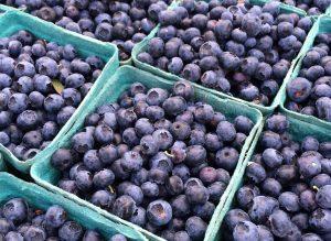 Blueberry Festival!