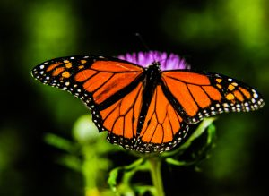 Pollinator Planters