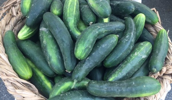 Preserving the Harvest: Canning & Pickling