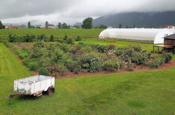 Fraser Valley Rose Farm