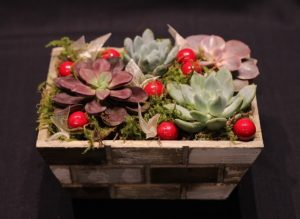 Succulent Planters with Port Moody Flowers